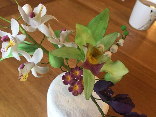 a sugar orchid flower
